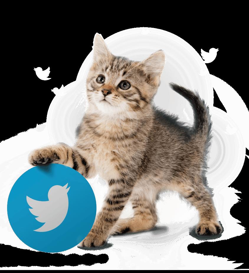 05 social management - BE Comunicazioni - logo twitter con gatto