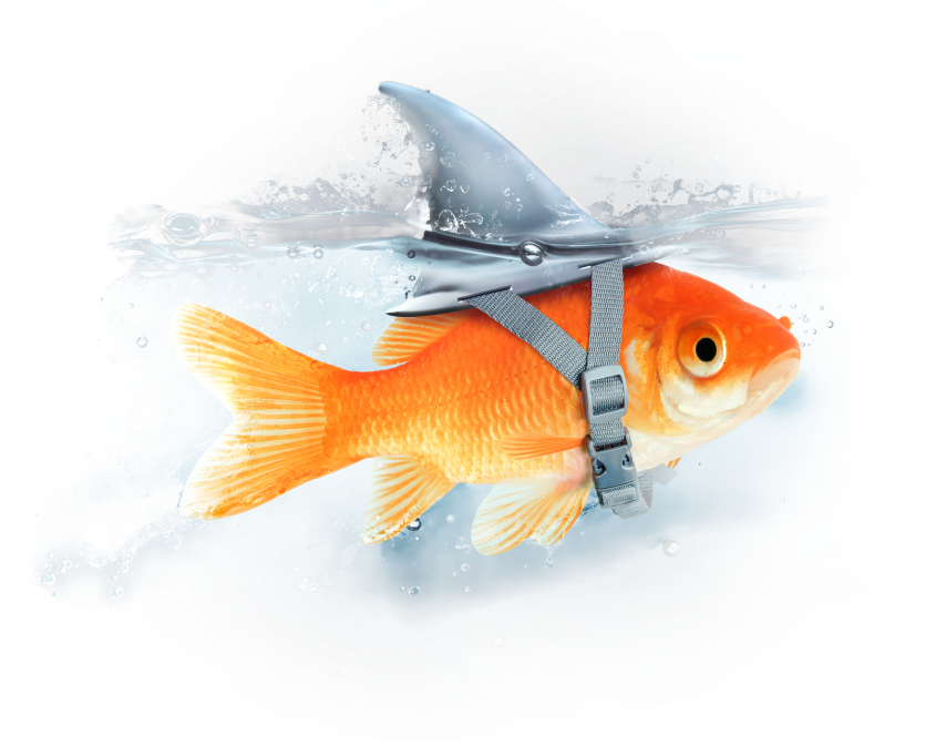 22 social management - BE Comunicazioni - pesci o squali